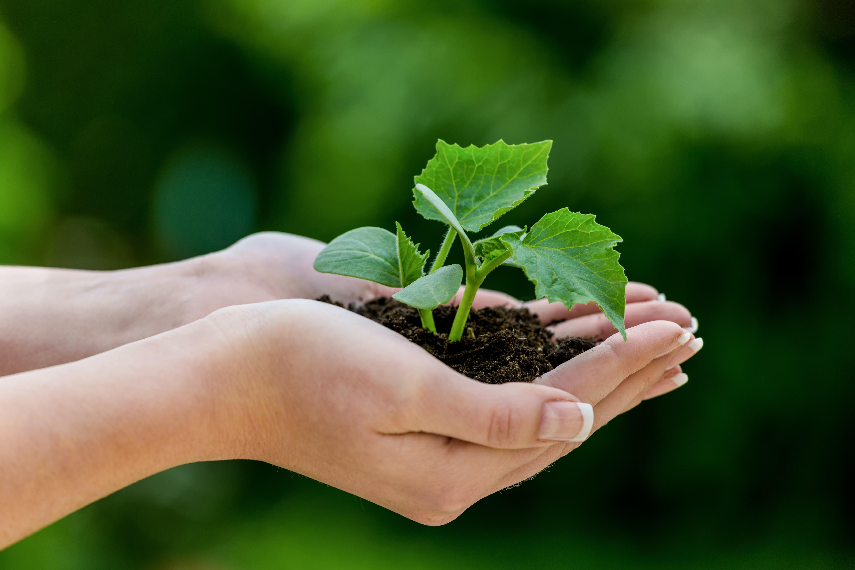 Logística e sustentabilidade ambiental